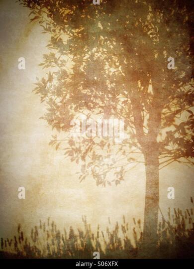 Silhouette of tree - Stock Image