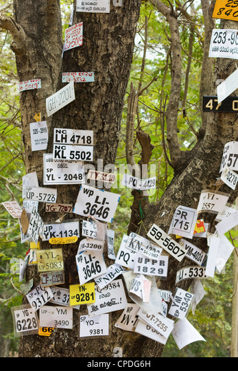 Vehicle numbers of pilgrims pinned to a tree in this sacred town, popular with all religions, Kataragama, South - Stock Image