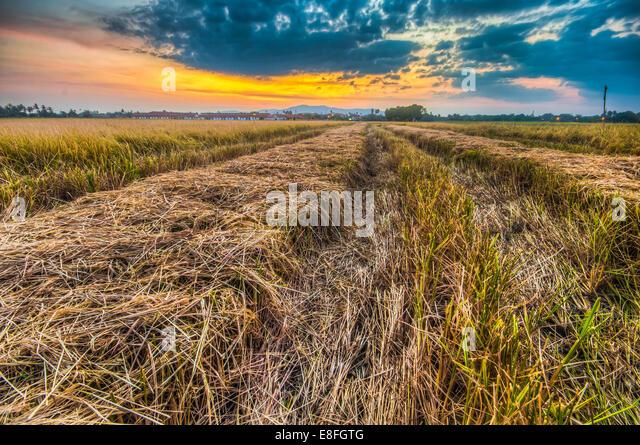 Malaysia, Penang Island, Juru, Butterworth, Penaga, View of field at sunset - Stock Image