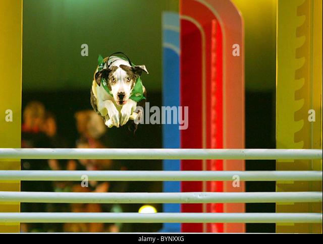 Iams Dog Food Headquarters