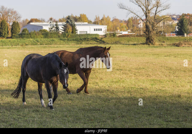 two Horses - Stock Image