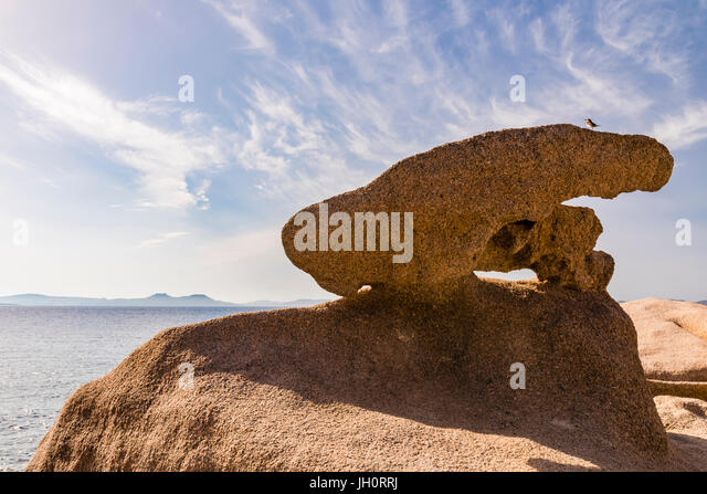 Small bird perched on rocks near Baya Sardinia, Sardinia, Italy - Stock Image