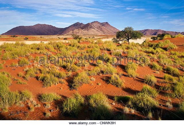 desert landscape in the morning, Namibia, Namib Naukluft National Park - Stock Image