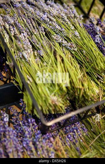 Dried lavender in crates, high angle view, close up - Stock Image