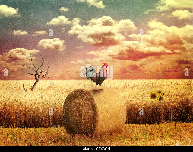 Grunge Country Landscape With Wheat Field - Stock Image