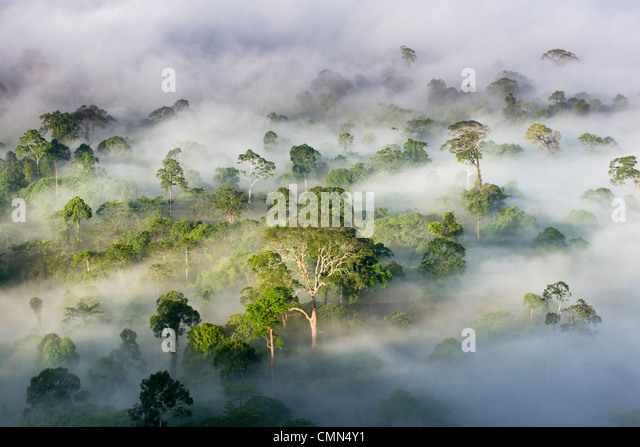 Mist and low cloud hanging over Lowland Dipterocarp Rainforest, just after sunrise. Heart of Danum Valley, Sabah, - Stock Image