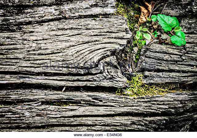 old textural background in form of wooden rough surface - Stock Image