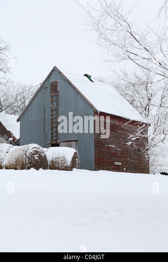 Old corn crib barn and round hay bales on farm in Iowa with tin and wood siding. Iowa - Stock Image