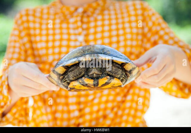 Holding a turtle - Stock Image