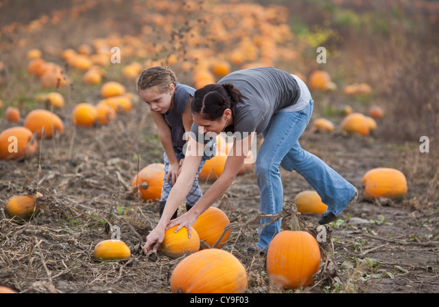 Mother and daughter picking pumpkins, pick-your-own farm in upstate New York, Mohawk Valley - Stock Image