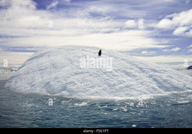 A single penguin resting on an iceberg! - Stock Image