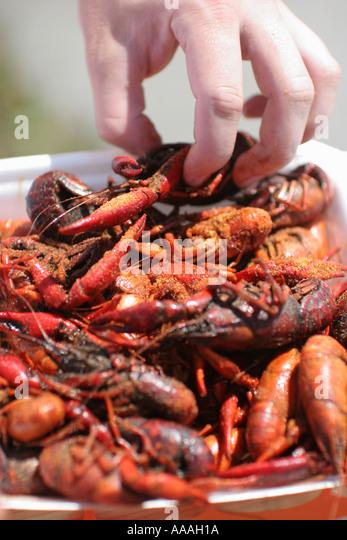 Florida, Zydeco Festival, Cajun food, crayfish, crawfish, - Stock Image
