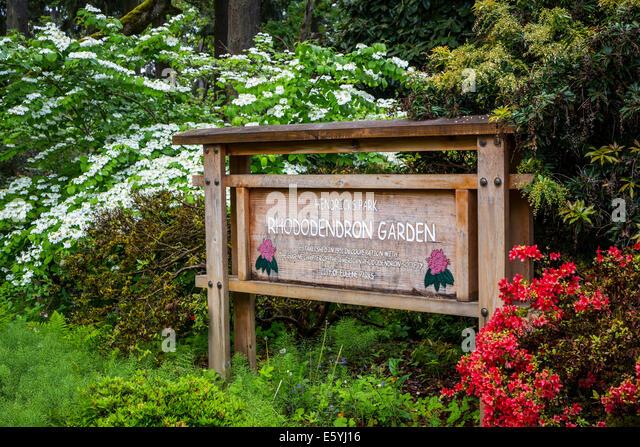 Hendricks Park and Gardens in Eugene, Oregon, USA. - Stock Image