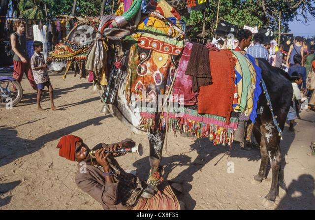 Hippie Flea Market , Indian Juggler playng flute with cow, Anjuna Beach , Goa, India - Stock-Bilder