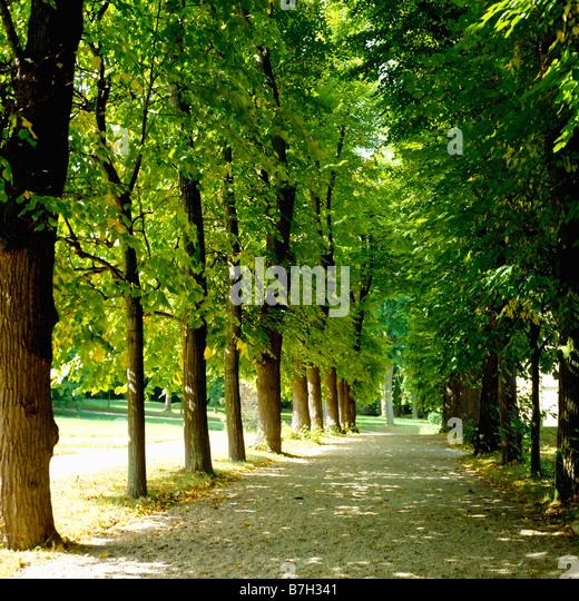 Scenic Runway Les Invalides Museum Paris France: Napoleon Bonaparte Green Stock Photos & Napoleon Bonaparte