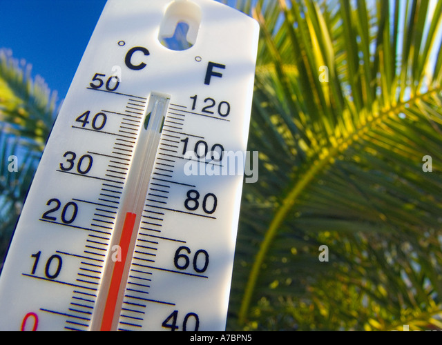 Thermometer displays a warm and sunny 25 degrees centigrade against a palm tree and blue sky background - Stock Image