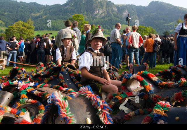 Cattle seperation in Bad Hindelang, Allgaeu, Bavaria, Germany, Europe - Stock-Bilder