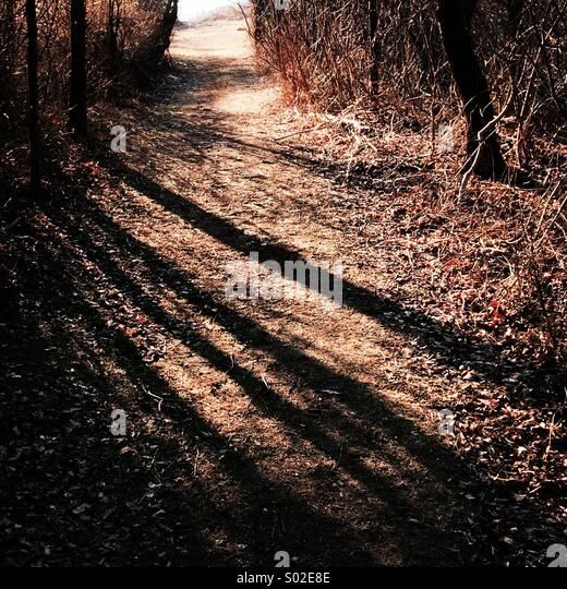 Trees cast a shadow on a path. - Stock Image