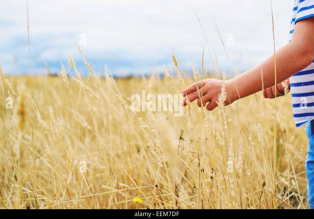Boy standing in a field picking wheat - Stock Image
