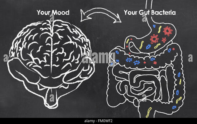Mood and Gut Bacteria with chalk on Blackboard - Stock Image