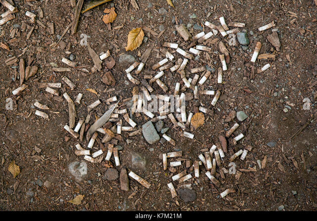 Cigarette butts on ground - Vancouver Island, British Columbia, Canada - Stock Image
