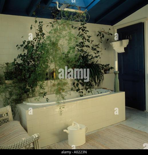Bath plants bathroom stock photos bath plants bathroom stock images alamy - Houseplants for the bathroom ...