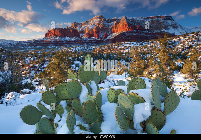 Winter snow on Schnebly Hill, Coconino National Forest, Sedona, Arizona. - Stock Image