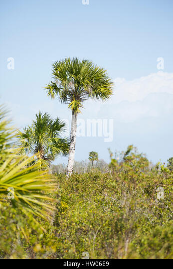 Canaveral National Seashore Florida Stock Photos