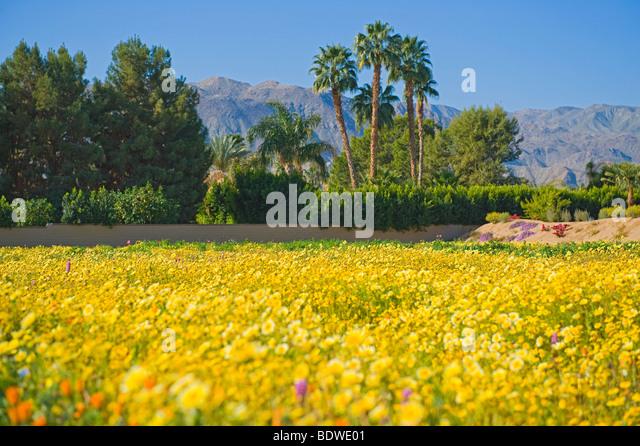 Desert Landscaping Stock Photos Desert Landscaping Stock Images Alamy