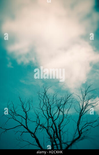 Sky with clouds and silhouette of tree branches. Dark, mysterious and moody setting. - Stock-Bilder