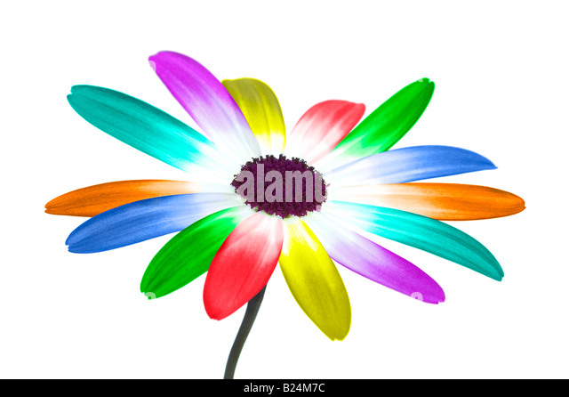 Abstract image of a daisy with its petals in the colours of the rainbow - Stock Image