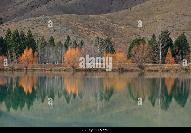 Colorful willows reflected in the bright green water of Wairepo Culvert near Twizel in New Zealand - Stock Image