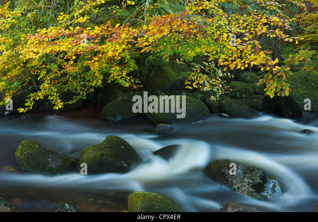 autumn colours along the East Dart River, Dartmoor, Devon, England, UK - Stock Image