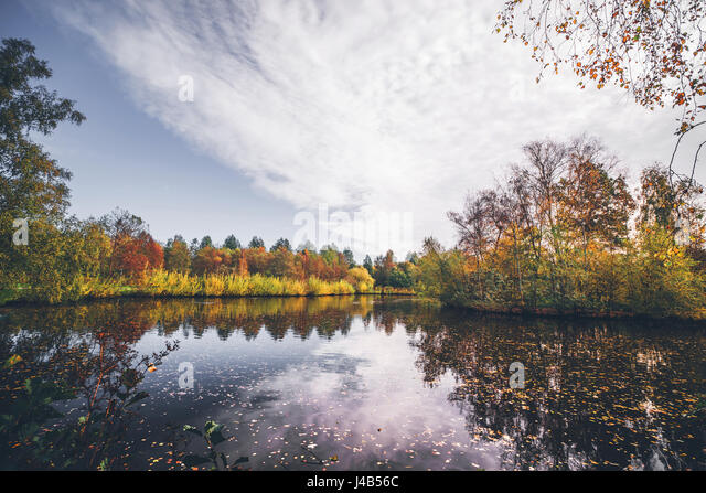 Lake in autumn with autumn leaves in the dark water and trees in autumn colors around the lake in the fall - Stock Image