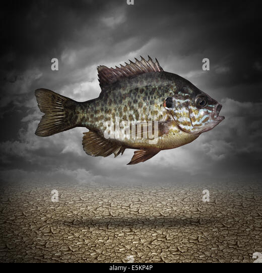 Fish out of water as a business or lifestyle metaphor for adapting to changes in the environment as an aquatic animal - Stock Image