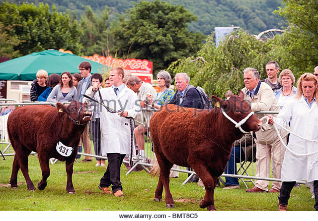 Three Counties Agricultural Show 2010, Malvern, UK. Cattle class at the Three Counties Show, with people watching. - Stock Image