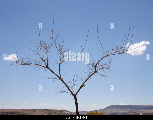 Tree and Clouds in desert landscape - Stock Image