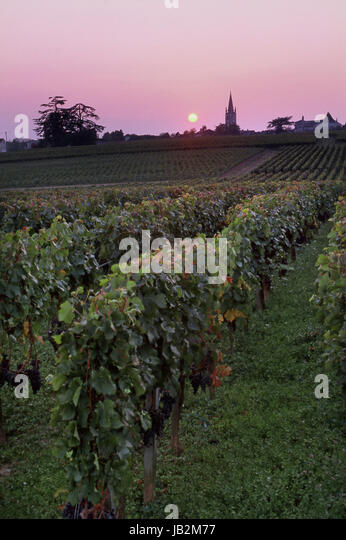 SAINT EMILION Sunset over vineyard of Château Troplong Mondot with church spire of St-Émilion in distance, - Stock Image