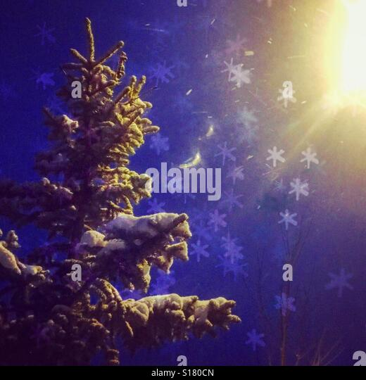 Looking up at an evergreen tree covered in fresh snow and illuminated by a street lights on a snowy night. Edit - Stock-Bilder