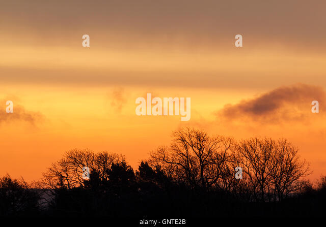 A line of trees in silhouette beneath a colourful orange sky at daybreak - Stock Image