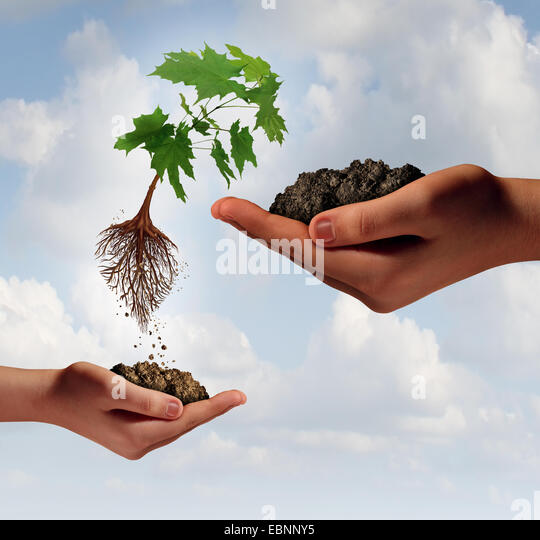 Rise and improvement business concept and accessing new markets symbol as a small hand holding a tree that is rising - Stock Image