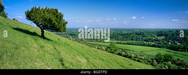 Summer view south with box tree from Box Hill, North Downs, Surrey Hills, Surrey, England, United Kingdom, Europe - Stock Image