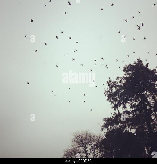 Birds background - Stock Image
