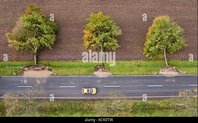 Rautenberg, Germany. 6th Oct, 2017. Three trees lie uprooted by a street near Rautenberg, Germany, 6 October 2017. - Stock Image
