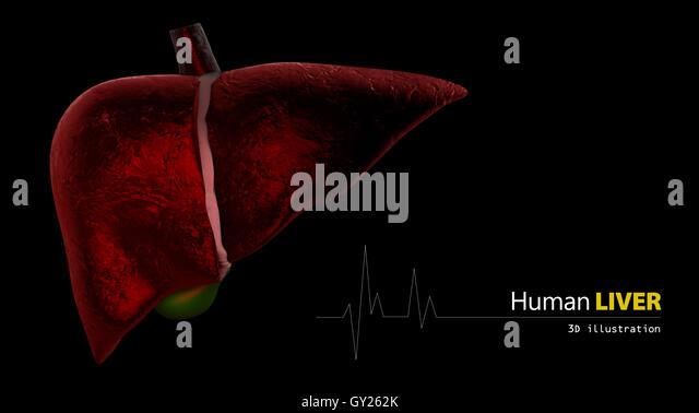 Human Liver Stock Photos & Human Liver Stock Images - Alamy