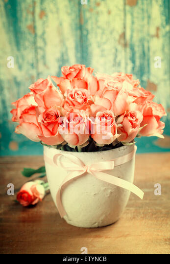 Pink roses in a pot on blue background - Stock Image