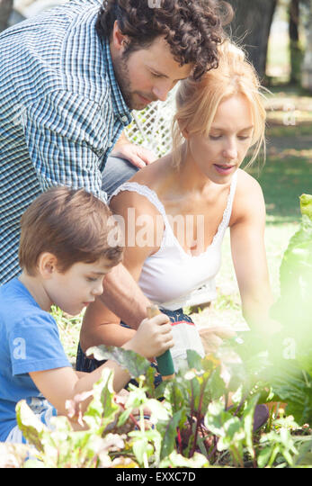 Family working in vegetable garden - Stock Image