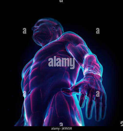 Detailed muscle human anatomy 3D illustration - Stock-Bilder