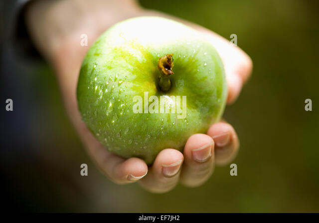 Hand holding fresh green apple - Stock Image