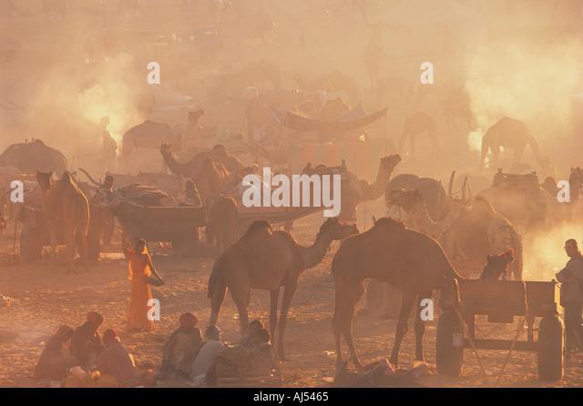 Camel Fair Pushkar Rajasthan India - Stock-Bilder